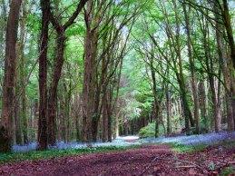 Knockatrina Wood