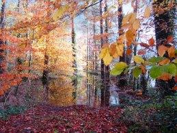 Dunmore Wood - Autumn