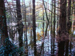 Dunmore Wood - Late Autumn