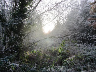 Frosty morning, Dunmore Wood, Durrow.