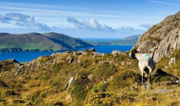 Kerry Way Coastline on Ireland's Wild Atlantic Way, Walking Tour