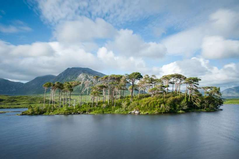Pine Island Derryclare Lough County Galway