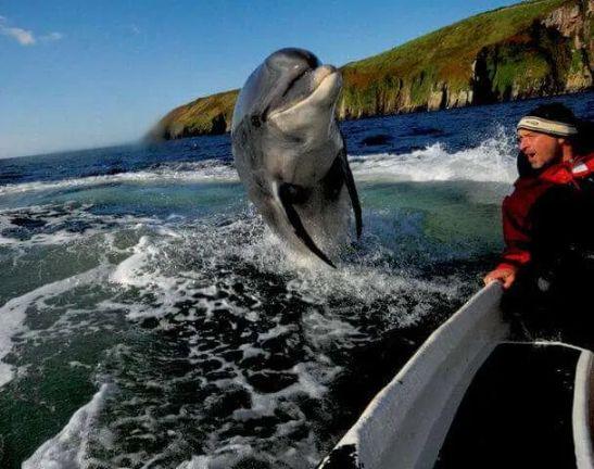 Fungi Dingle Dolphin Kerry Ireland