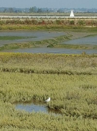 MarshBird