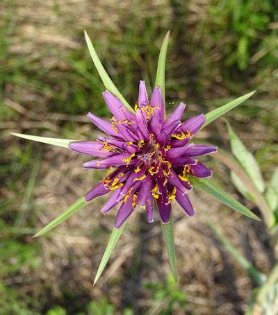 Marshflower