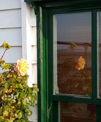 WindowRose