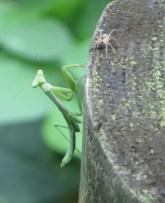 praying-mantis-and-spider