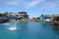 ..and a full fledged dolphin show!
