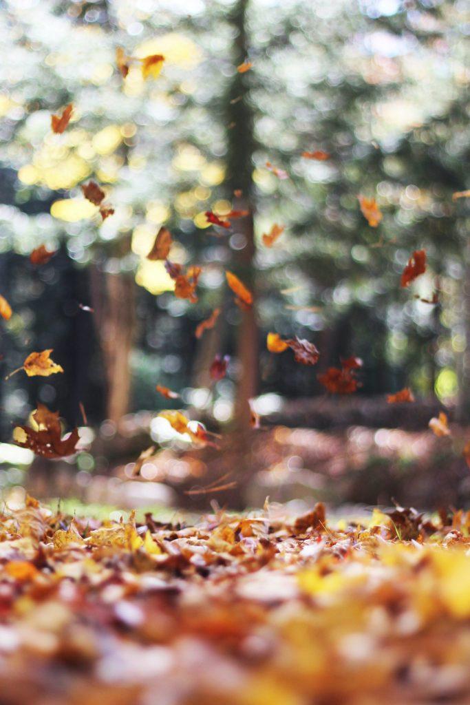 Photo by Autumn Mott Rodeheaver