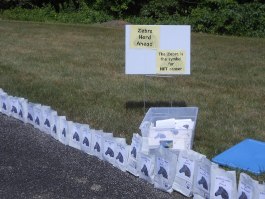 In 2015, we created a Zebra Flash Herd at the Greater Fall River Relay for Life that consumed on-quarter of the outside of the track with luminaria honoring NET cancer patients across the world.