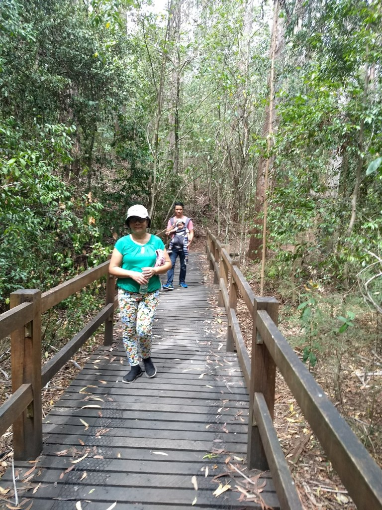 Forestry Trail at the Cumberland State Forest, West Pennant Hills