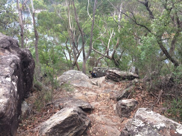 Section of the Great North Track, Berowra Waters.