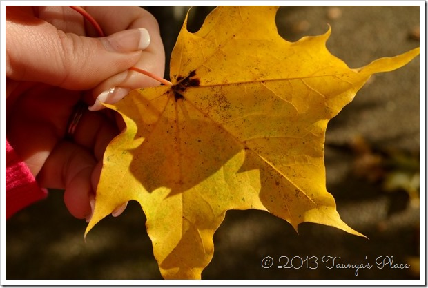 Fall is here, Yellow Leaf