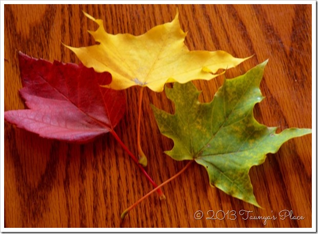 Fall is here, LEAVES