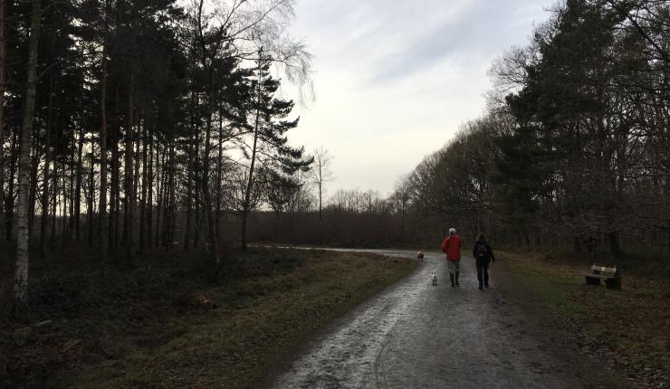 Wyre Forest walk