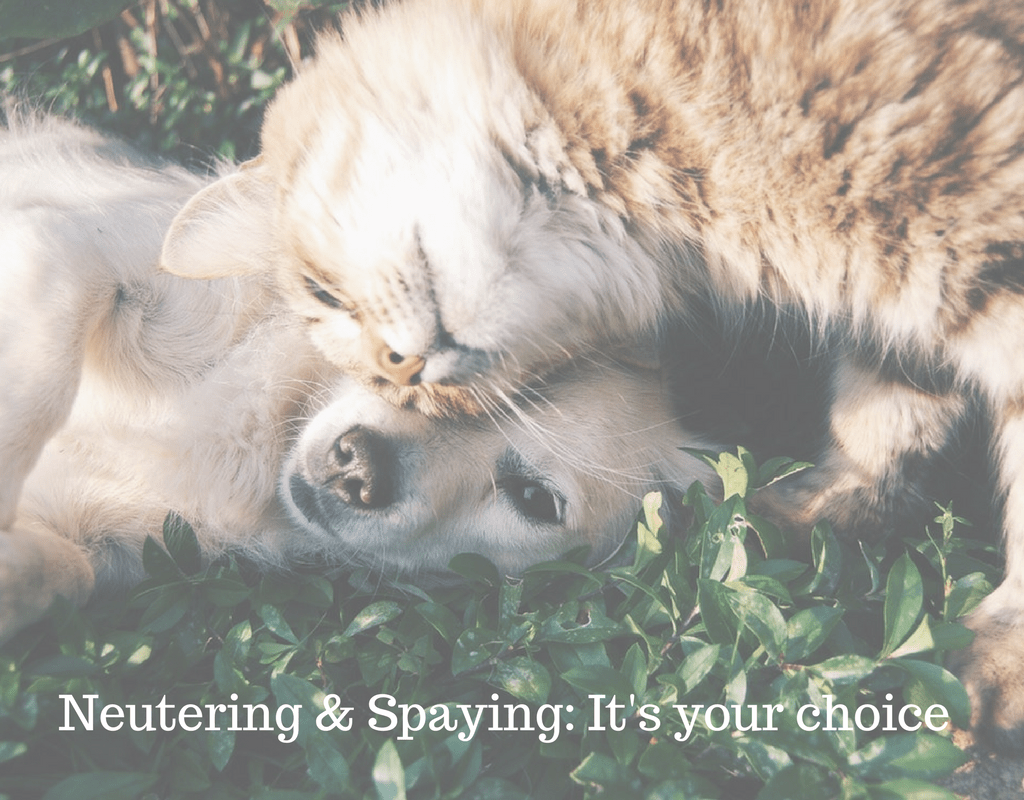 Neutering & Spaying_ It's your choice