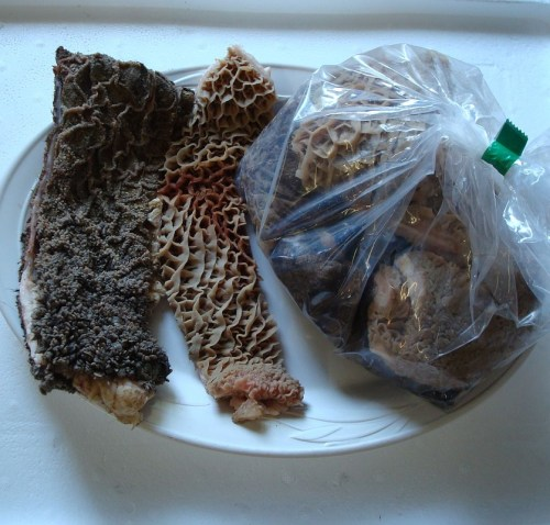 Green Tripe and health benefits