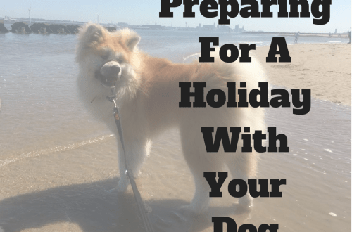 holiday with your dog
