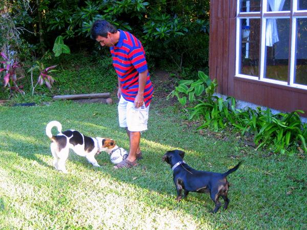 gerardo-dogs