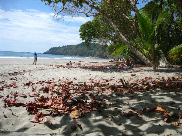 man-ant-beach-2