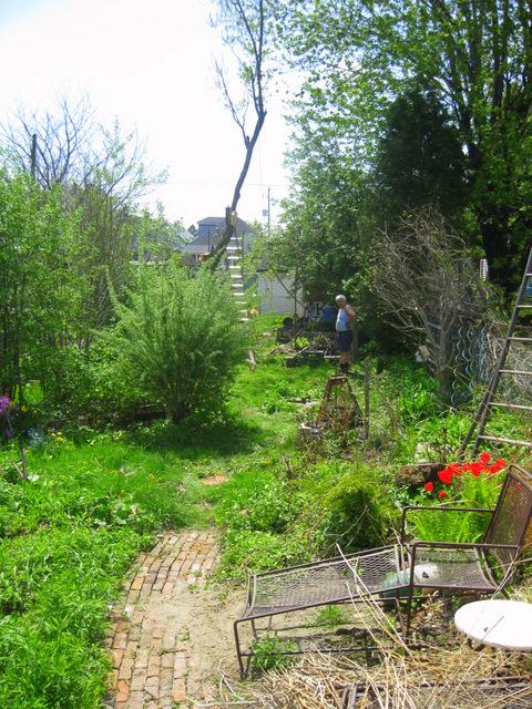yard with tree
