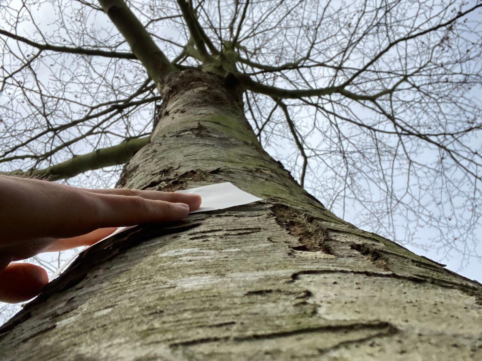 Becoming tree
