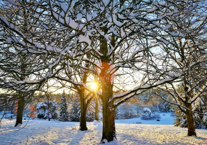 Birmingham University The Vale at Winter