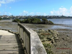 Walks in Auckland