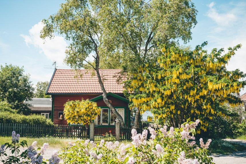Stockholm Archipelago Sandhamn Yellow Flowers