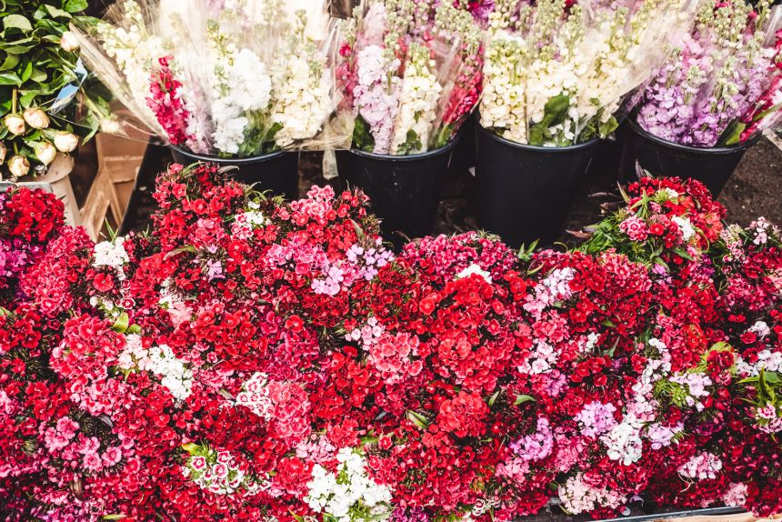 Columbia Road Flower Market London Red Flowers