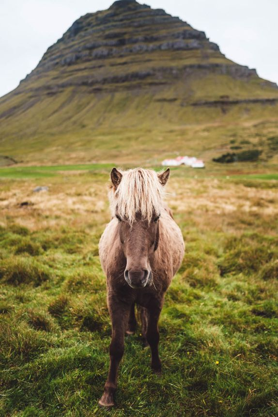 Iceland Horses Green Mountain Fringe