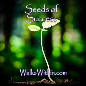Seeds of Success Guided Meditation