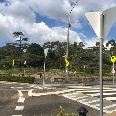 Wombat crossing at roundabout in Balmain