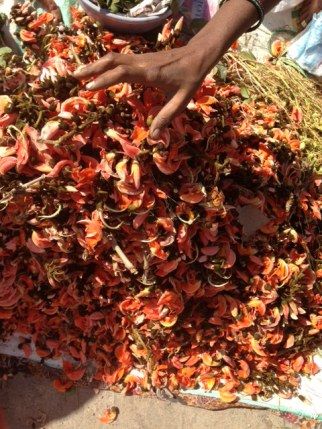 Spring flowers' Palash' - Shiv Puja special