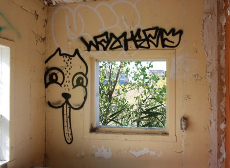Waxhead in an abandoned building