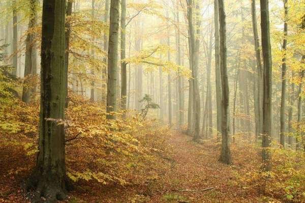 Фотообои Туманный лес 0815 купить в Украине | Интернет ...