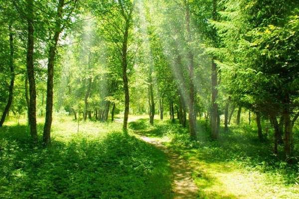 Фотообои Лес 5396 купить в Украине | Интернет-магазин ...