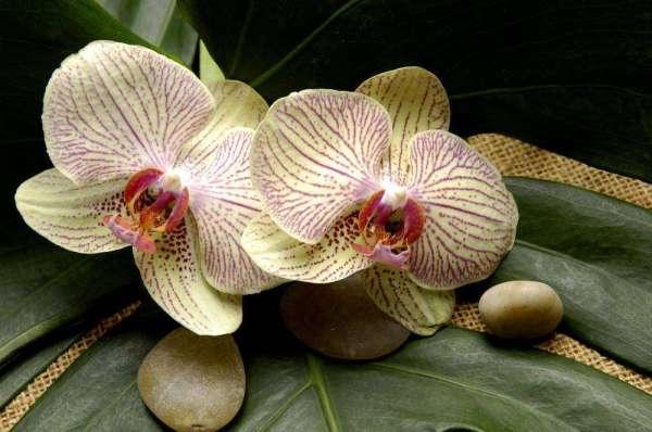 Фотообои Желтые цветы орхидеи 5027 купить в Украине ...