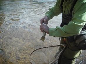 South Platte Trout Fishing 1