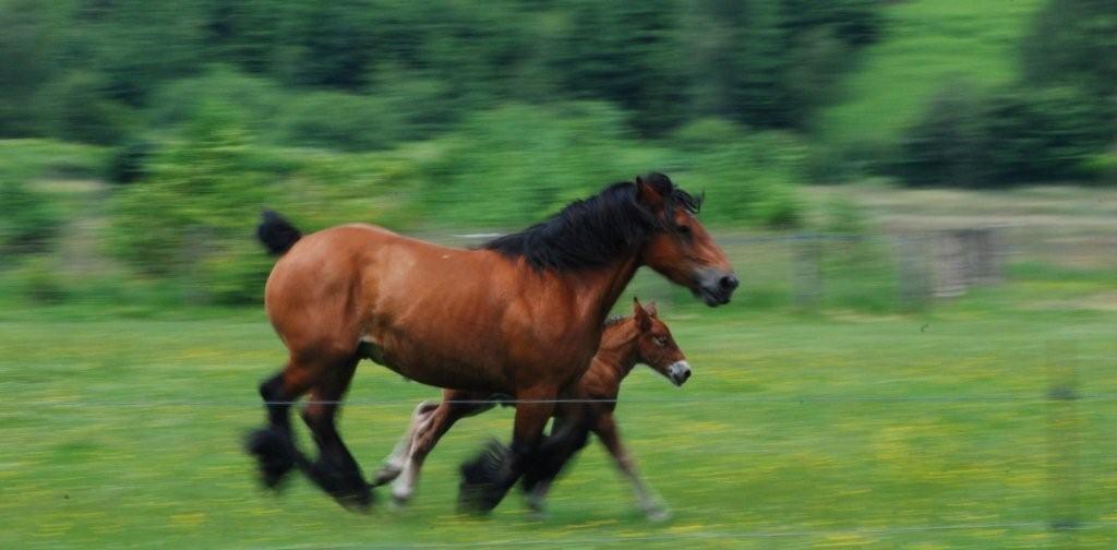 ARDUINA : Serge Darat et Alain van Steenacker, débardeurs à cheval (1997)