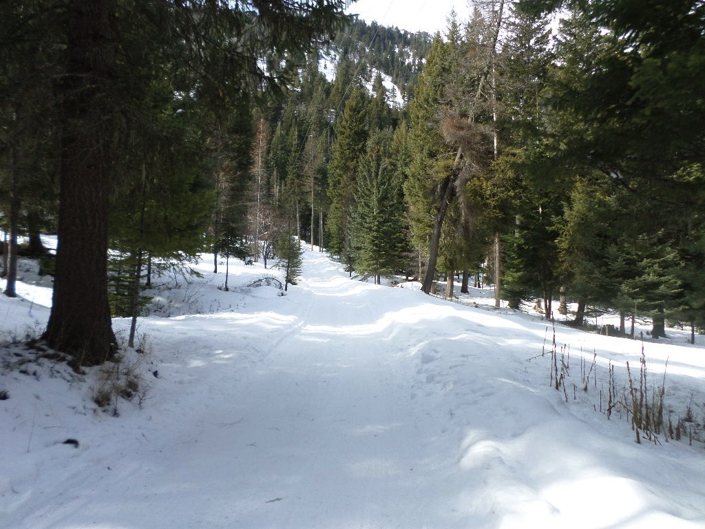 Gentle driveway on your deeded land.