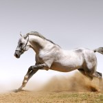 Horse Wallpapers Group 92