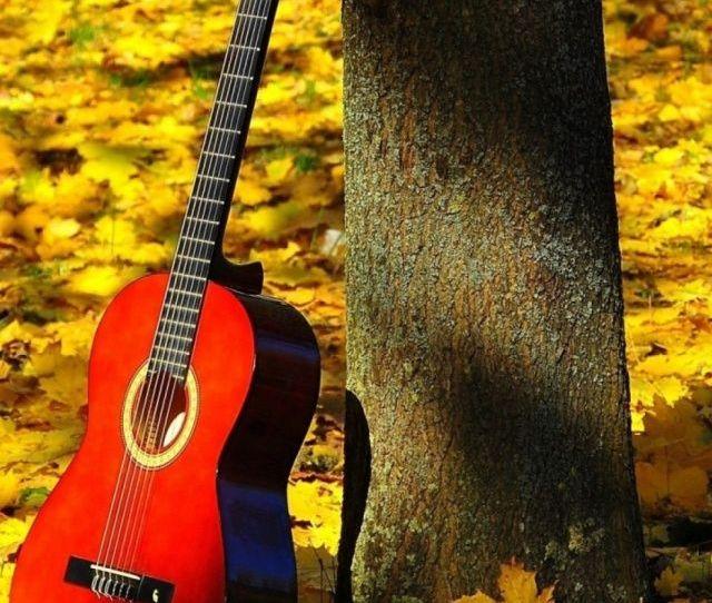 Maple Guitar Mobile Wallpaper Mobiles Wall