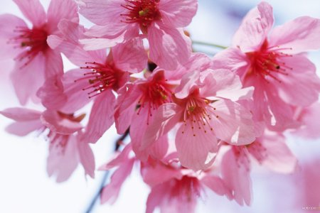 Pink spring flowers wallpaper 4k pictures 4k pictures full hq free wallpaper free flower wallpaper spring flower wallpaper free flower wallpaper spring flower wallpaper x wallpaper index spring flowers backgrounds for mightylinksfo