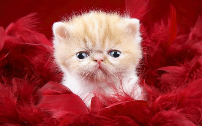 Cute and lovely wallpaper newwallpapers sweet cute love wallpapers group 79 altavistaventures Image collections
