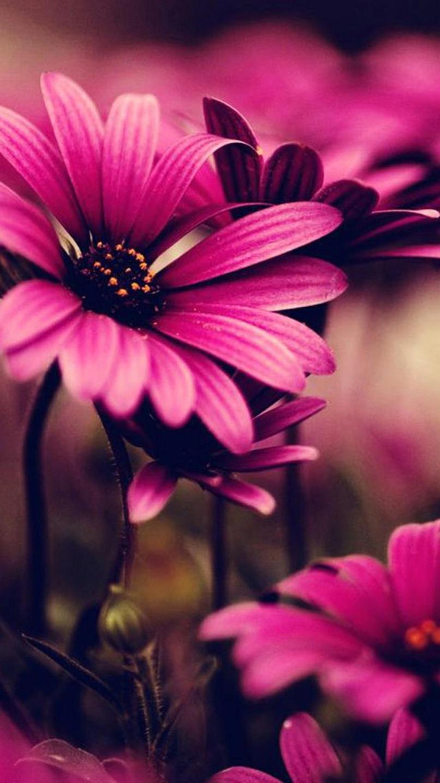 Flowers Backgrounds For Iphone Wajiflower Co