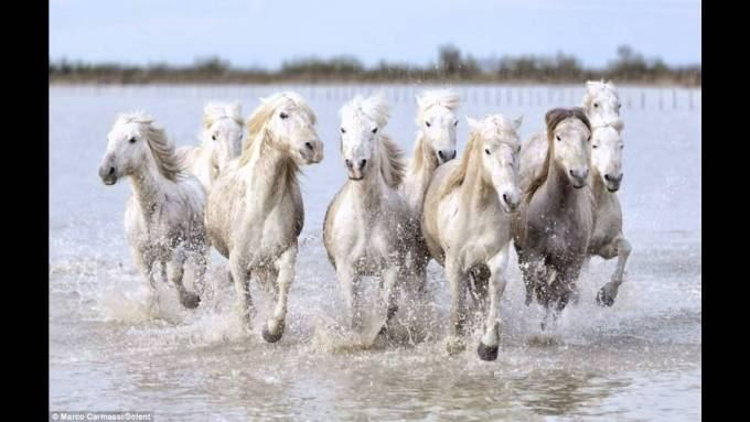 7 Horse Images Hd 1080p Walljdi Org