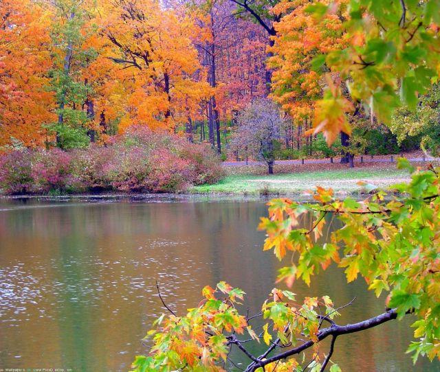 Hd Fall Nature Wallpapers Wallpaper