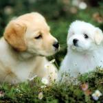 Dog Wallpapers Puppy Group 90