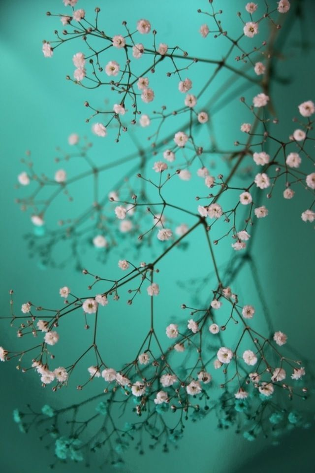 Pretty Wallpapers For IPhones Group  72   Pretty little Flowers iPhone Wallpaper Download   iPhone